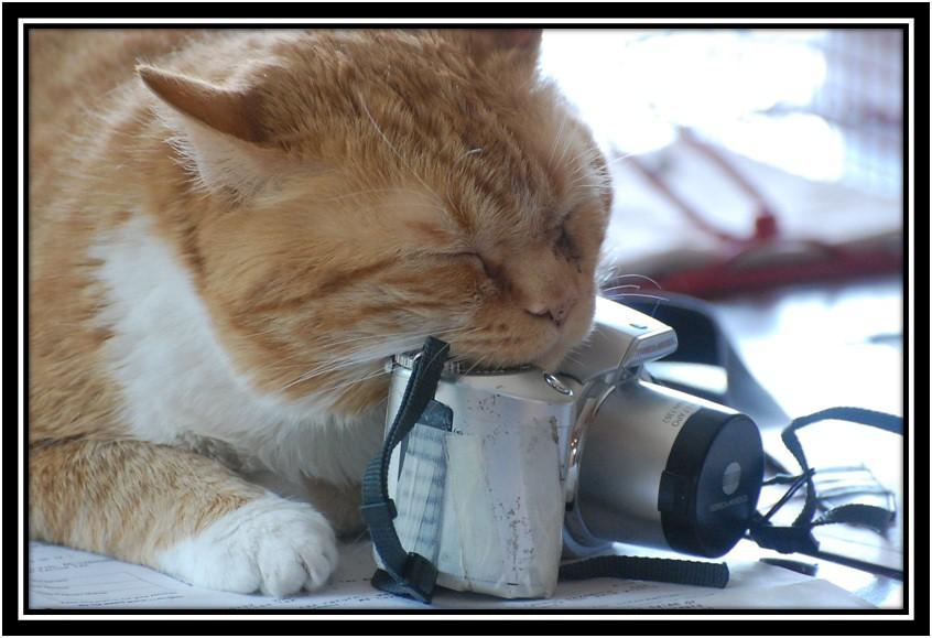 framed mo camera
