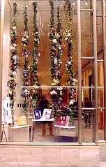 Retail Store Window Designers
