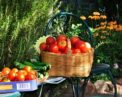 from the garden (champbass2) Tags: california summer gardening tomatoes zucchini homegrown vegetablegardening summergarden fromthegarden freshvegetables freshtomatoes champbass2 tomatoesinabasket