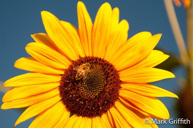 Sun on the Flower