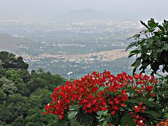 Thriving Nature (Bishwajit Sharma Photography) Tags: travel flowers trees red india nature countryside horizon hill away jungle remote serene salem plains plain far tamilnadu hillstation distant habitation yercaud gulmohar