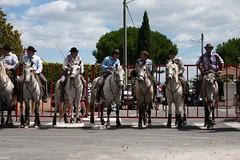 Valergues, abrivado 24/07/2011 (kat's here) Tags: horses cheval chevaux abrivado gardians valergues