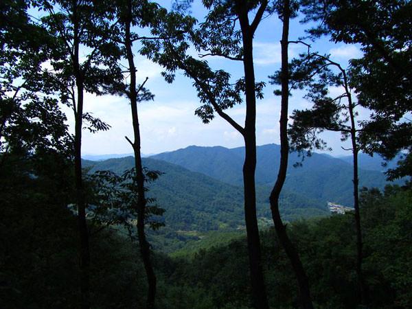 dani_forest