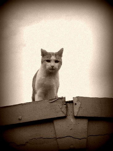 Rudi on the garage roof sepia