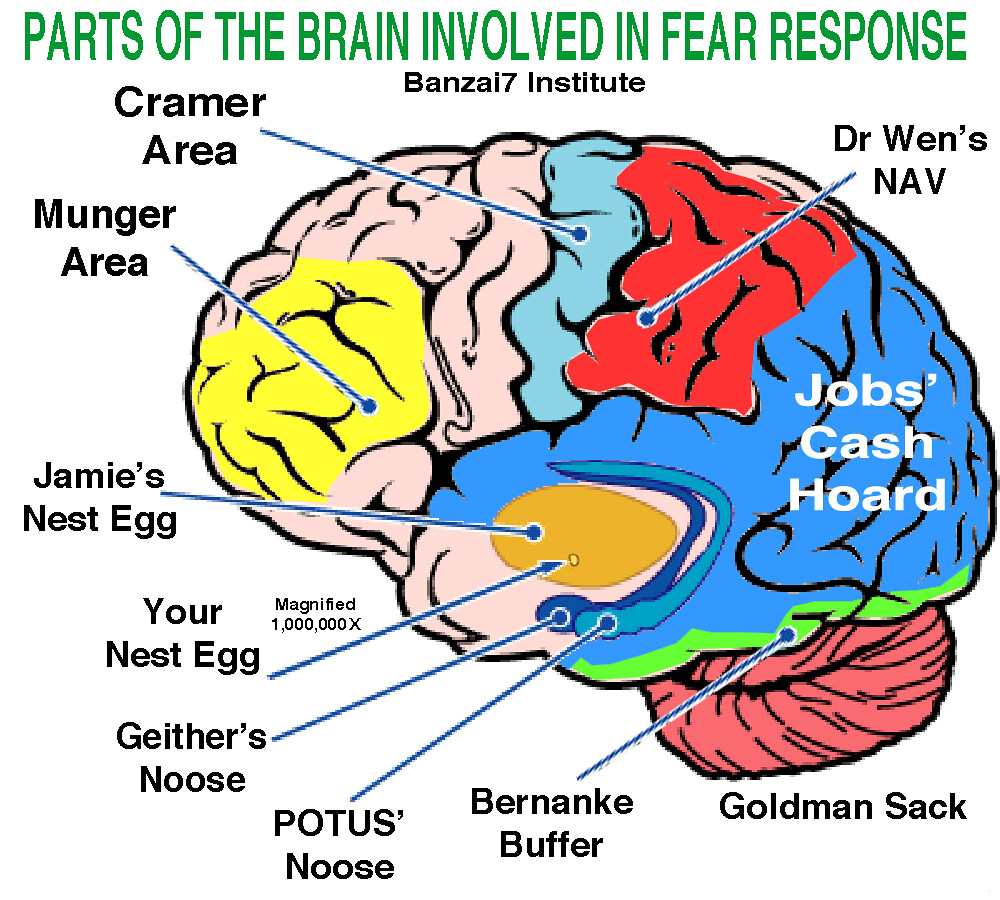 PARTS OF THE BRAIN INVOLVED IN FEAR RESPONSE