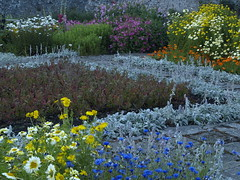 Gertrude Jekyll's Colours and Planting (cycle.nut66) Tags: blue light red orange plants color castle yellow daisies garden island four evening soft colours path stones pastel olympus holy mauve gertrude zuiko lindisfarne planting jekyll hollyhocks thirds evolt e510