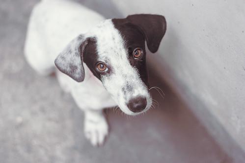 [フリー画像] 動物, 哺乳類, 犬・イヌ, 子犬・小犬, 201108091100