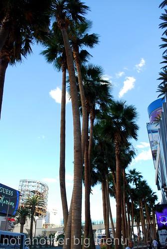 Las Vegas, Nevada - Palm trees by Vegas Strip
