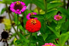 Aug072011_0894-Flowers (©Delos Johnson) Tags: flowers canon garden sunflower topaz delos g9 detail4 denoise