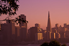 Leafy Skyline (JIM Mourgos) Tags: sanfrancisco holiday treasureisland fireworks fourthofjuly independenceday ybi aquaticpark yerbabuenaisland 2011