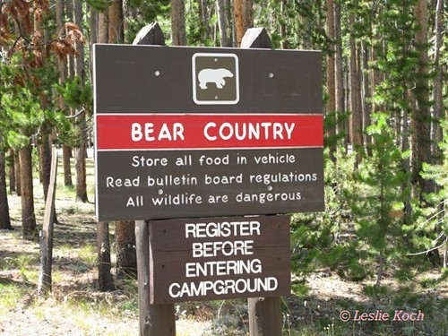 Yellowstone National Park - Bear Country Sign