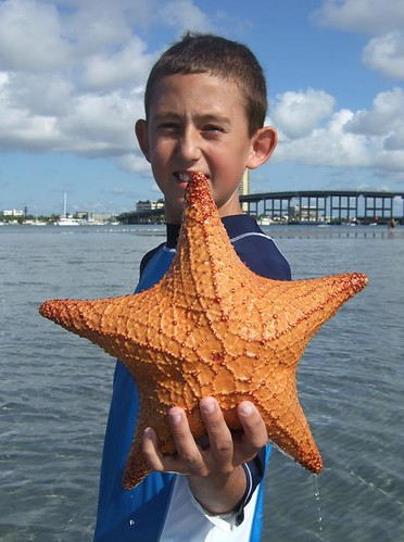 Domanik with starfish