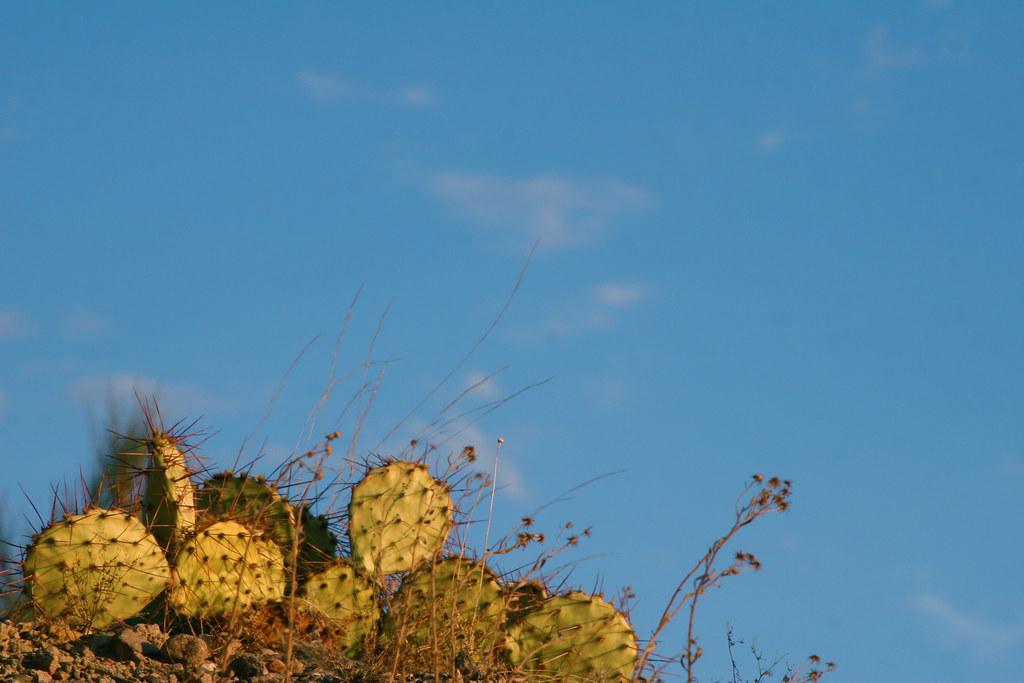Cactus & Blue Skies