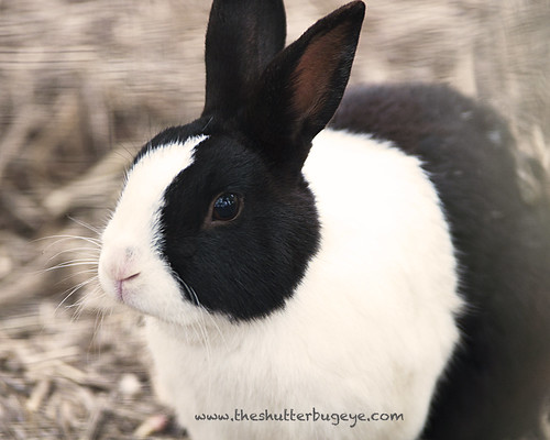 Black and white rabbit by The Shutterbug Eye™