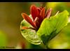 Flower 2 (Life-Photography) Tags: 1001nights wow1 wow2 wow3 1001nightsmagiccity mygearandme mygearandmepremium mygearandmebronze mygearandmesilver ringexcellence dblringexcellence flickrstruereflection2 flickrstruereflection3 trueexcellence1 trueexcellence3
