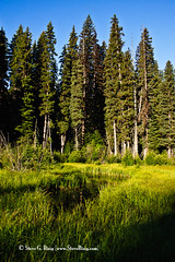 South Fork Meadow - Kittitas County, Washington
