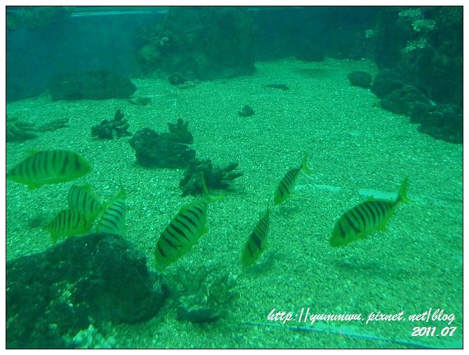 110711小丑魚主題館 (35)