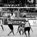 Volley22
