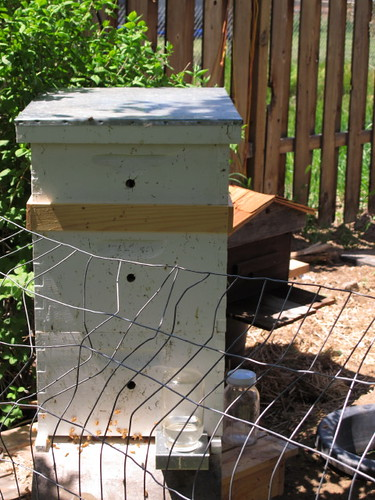 Our first hive