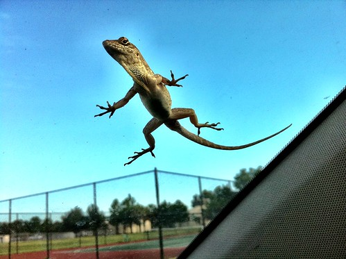 Windshield Lizard