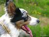 Denji (Domi Rolland ) Tags: chien france nature animal canon bordercollie aveyron 2011 midipyrénées g9 denji bouloc