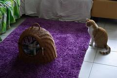 Carlos und Nelli (frankbehrens) Tags: cats tom cat chats kitten chat gatos gato katze katzen kater