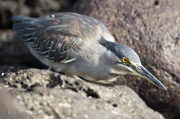 RYALE_Galapagos-191