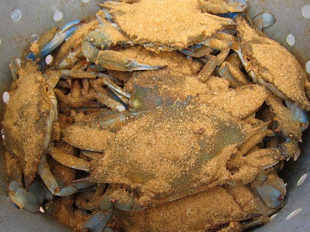 Crabbing et al 049