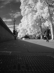 Westminster IR (Back, and to the left) Tags: blackandwhite bw london westminster ir suit learning infrared cityslicker woodeffect hackedcamera flickr:user=backandtotheleft tumblr:user=thediaryofadisappointingman