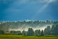 [フリー画像] 自然・風景, 森林, 霧・霞, 201107281900