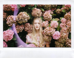 (katieeleanor) Tags: pink roses flower bus girl purple portfolio instax kittygallannaugh