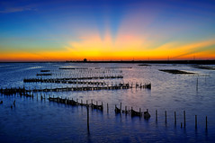 Zig zagging oyster field (Vincent_Ting) Tags: sunset sea sky reflection nature water clouds nikon glow taiwan   formosa  zig  zag           z