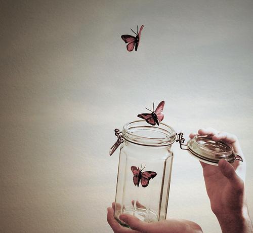 butterflyjar