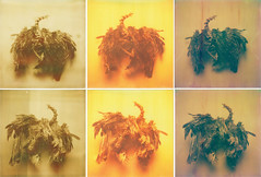 (sol exposure) Tags: bird skeleton polaroid sx70 px100 closeuplens atz autaut artistictz px680ff