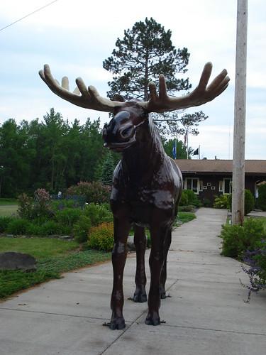 Fiberglass Moose - Moose Lake
