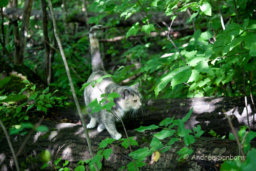 Possum Takes a Hike-3.jpg