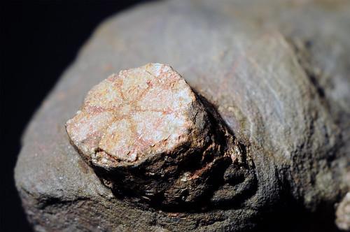 cordierite(pseudomorph)