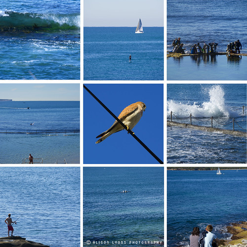 Cronulla Blues by alison lyons photography