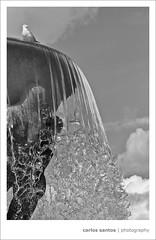"""Norway (Carlos """"Grury"""" Santos) Tags: bw fountain birds oslo norway blackwhite cityscape pigeons statues blackwhitephotos grury"""