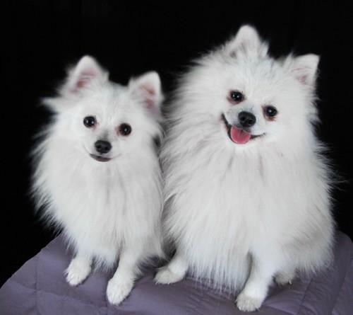 Daisy & Pippa's parents