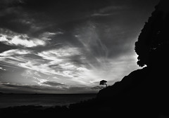 One tree (Tim Bow Photography) Tags: sea newzealand sky blackandwhite bw white black tree art clouds canon landscape one rocks nz british welsh svenska matauribay onetree 550d canon550d timboss81 timbowphotography
