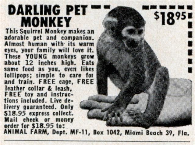 med_pet_monkey