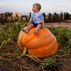 Lucas y la calabaza gigante (Jose Casielles) Tags: color planta campo calabaza niño yecla verdura calabazagigante fotografíasjcasielles