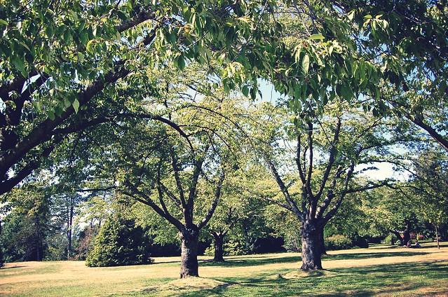 big ol' trees 2.