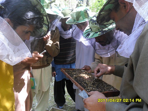 Skardu Honey Bee Training_Pakistan_April 2011 (11)
