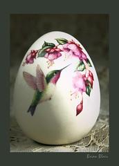 Little Hummer (-Brian Blair-) Tags: texture hummingbird egg odc rvc