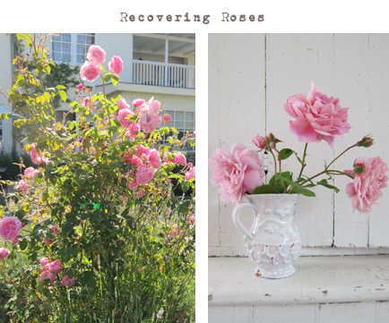 recoveringroses