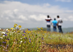 Kaas.. a plateau of flowers! (Bhaskar Dutta) Tags: flowers wallpaper cloud india flower men 35mm landscape nikon scenery plateau valley balance maharastra satara kaas d5000
