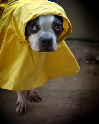 Raincoat II