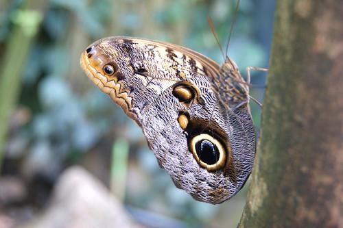 ButterflyPavilion14-butterfly